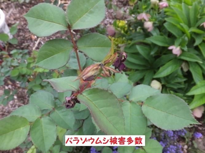 DSCF9673_1.jpg
