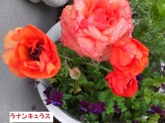 DSCF9798_1_2018041812054619a.jpg