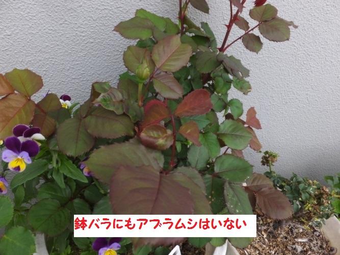 DSCF9861_1_20180419102307ebd.jpg