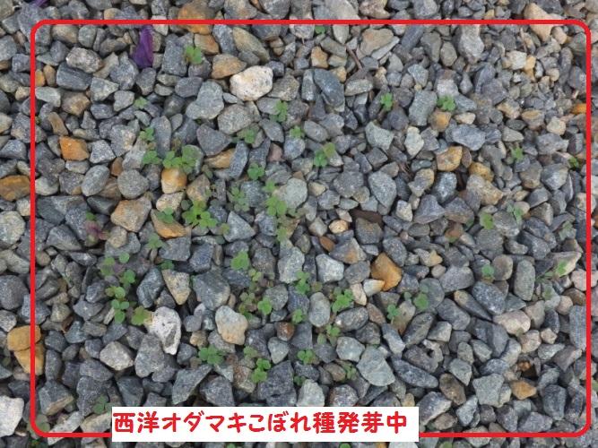 DSCF9864_1_201804191033415aa.jpg