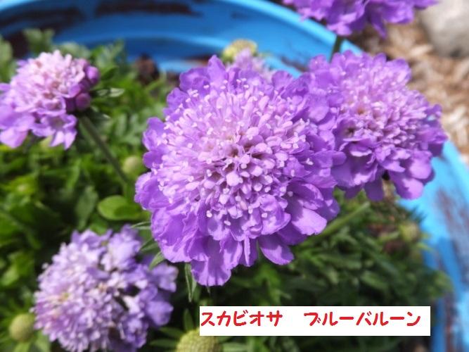 DSCF9885_1_2018042013122704d.jpg