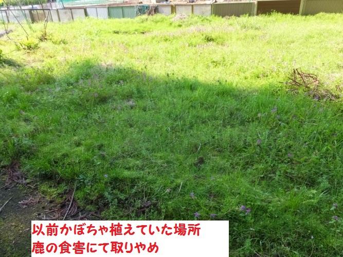 DSCF9960_1_201804211057050cd.jpg