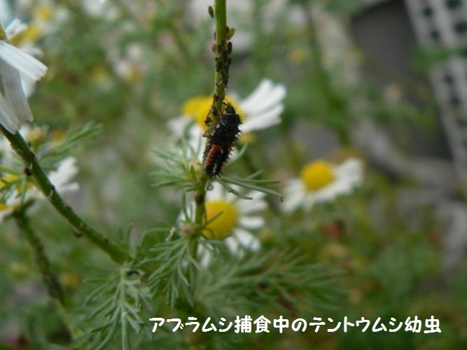 P1380899_1.jpg