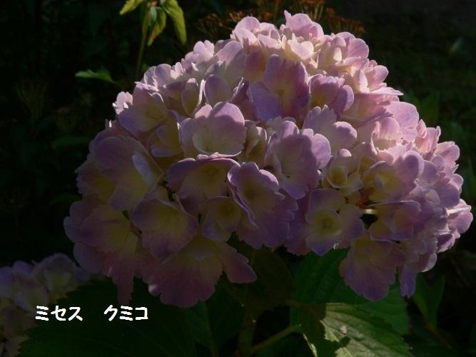 P1390076_1.jpg