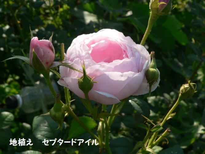 P1390124_1.jpg