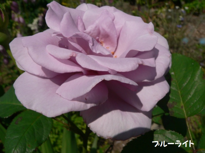 P1390140_1.jpg