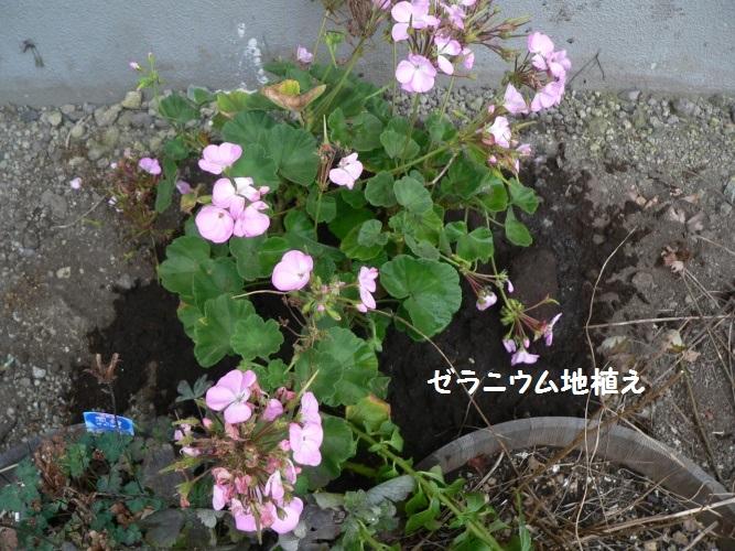 P1390273_1.jpg