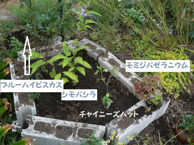 P1390278_1.jpg