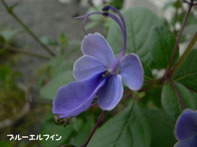 P1390294_1.jpg