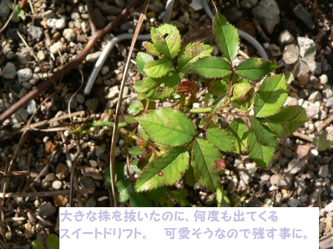 P1390311_1.jpg