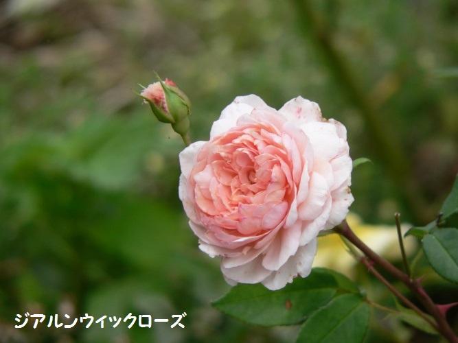 P1390323_1.jpg