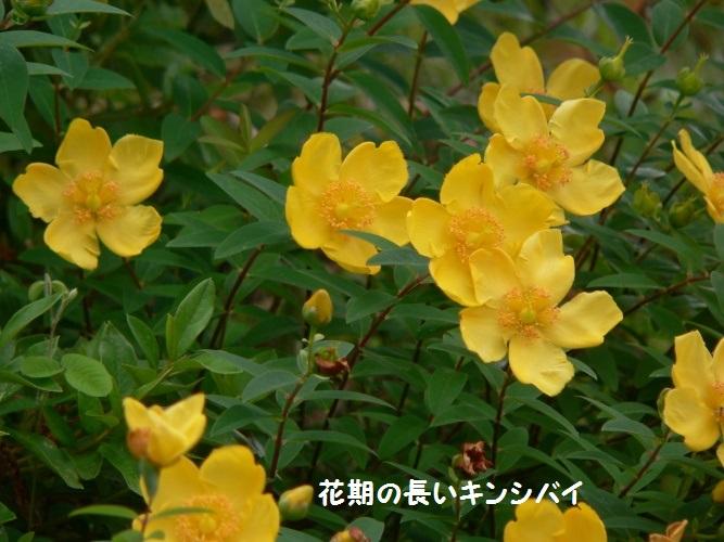 P1390325_1.jpg