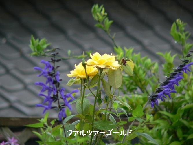 P1390358_1.jpg