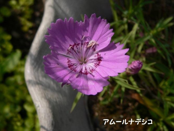 P1390413_1.jpg