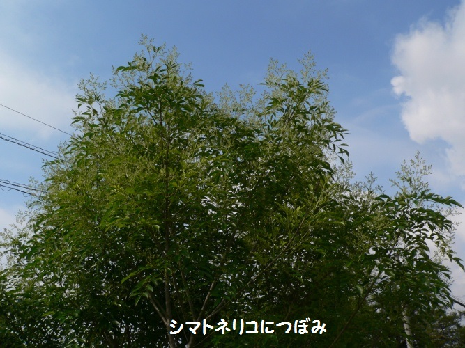 P1390431_1.jpg