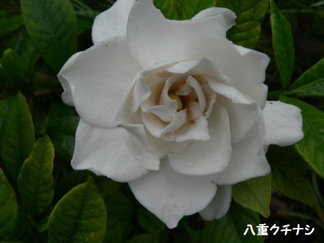 P1390510_1.jpg