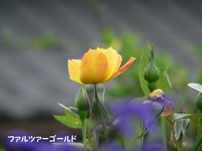 P1390525_1.jpg