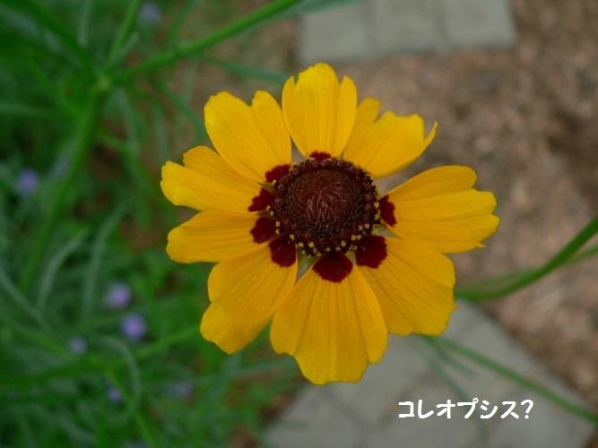 P1390604_1.jpg
