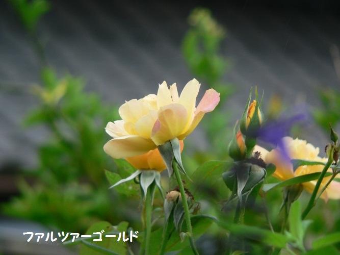 P1390611_1.jpg