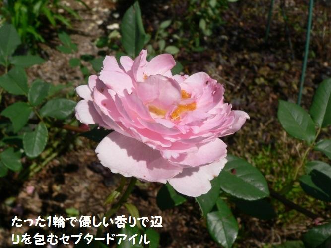 P1390665_1.jpg