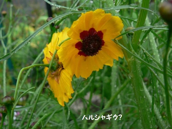 P1390683_1.jpg