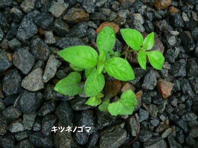 P1390689_1.jpg