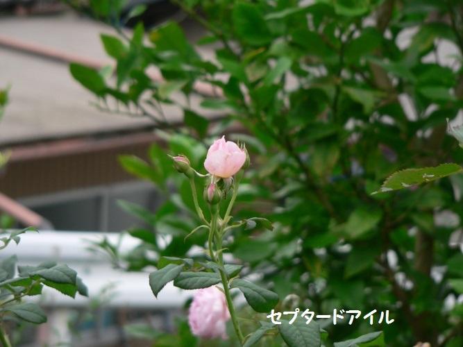 P1390839_1.jpg