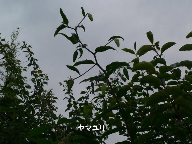 P1390857_1.jpg