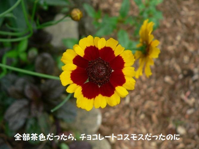 P1400069_1.jpg