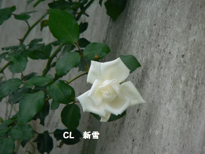 P1400146_1.jpg
