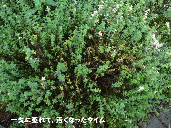 P1400157_1.jpg