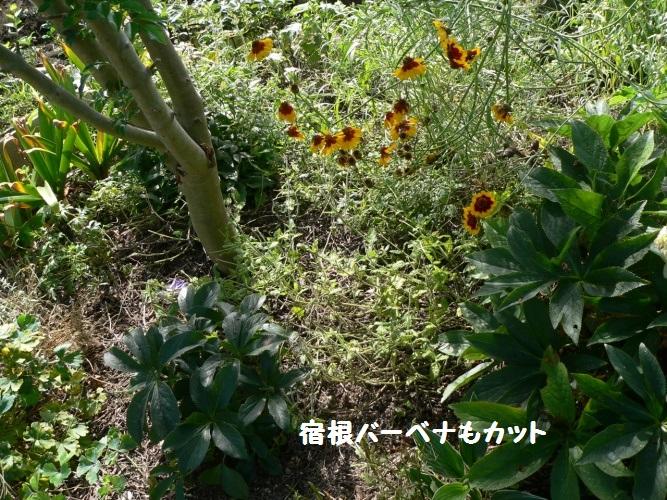 P1400217_1.jpg