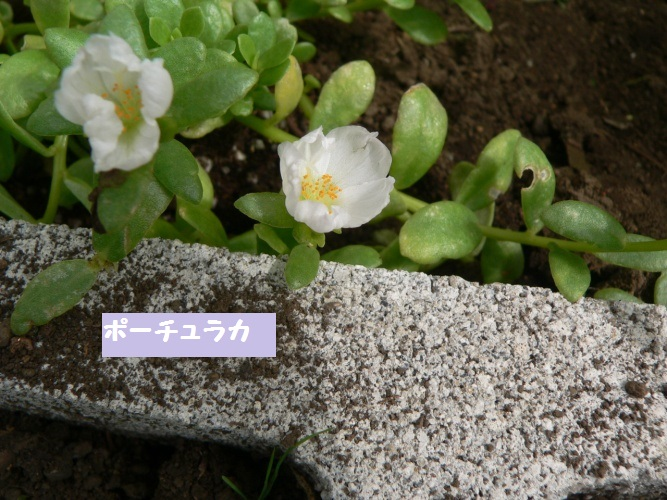 P1400306_1.jpg
