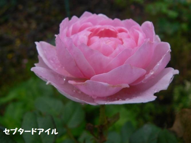 P1400318_1.jpg