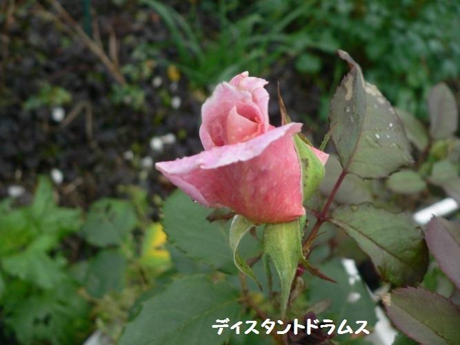 P1400349_1.jpg