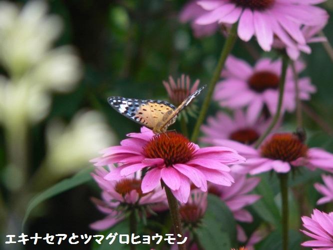 P1400417_1.jpg
