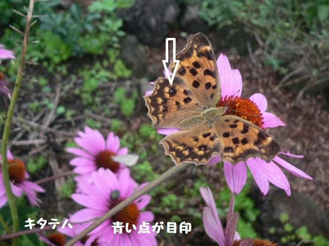 P1400441_1.jpg