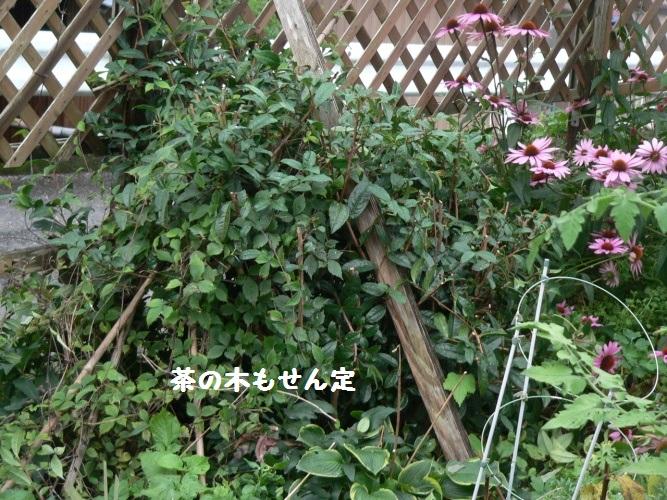 P1400459_1.jpg