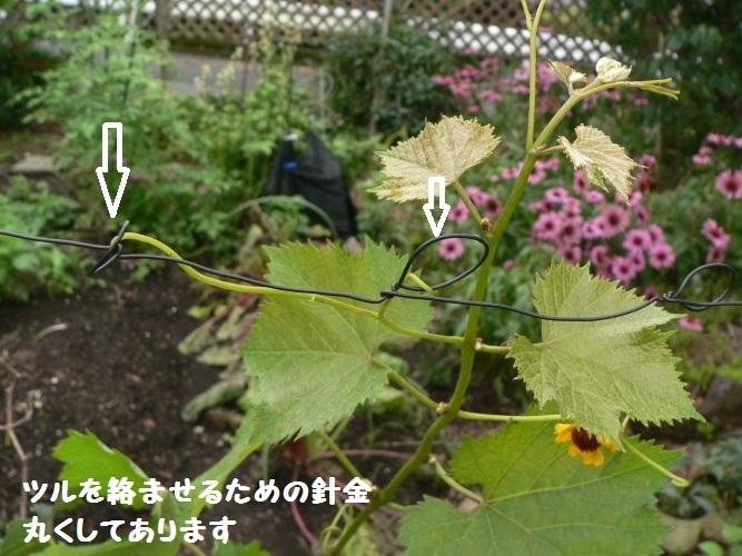 P1400471_1.jpg
