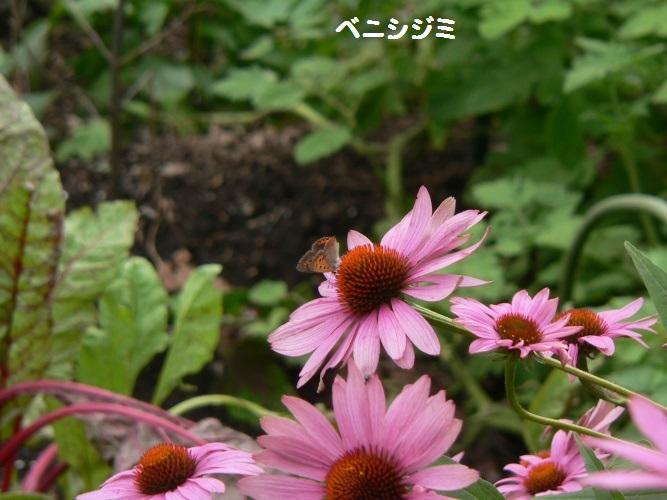 P1400475_1.jpg