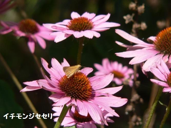 P1400519_1.jpg