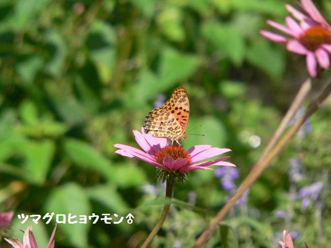 P1400522_1.jpg