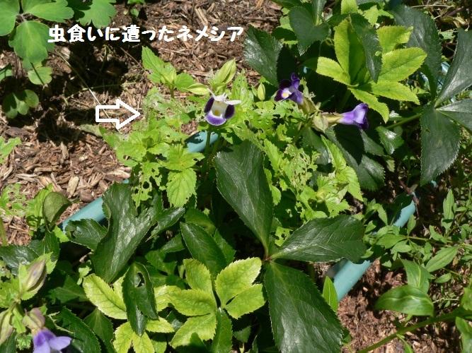 P1400531_1.jpg