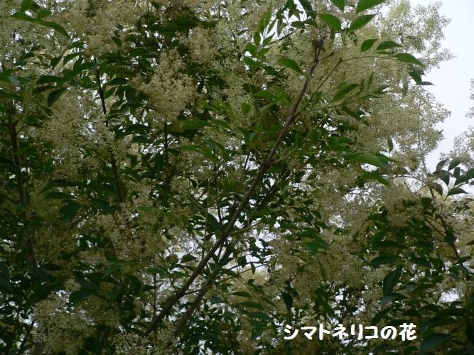 P1400545_1.jpg