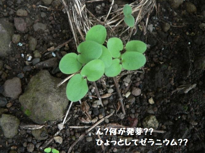 P1400578_1.jpg