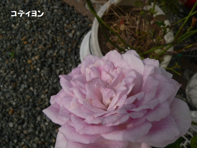 P1400588_1.jpg