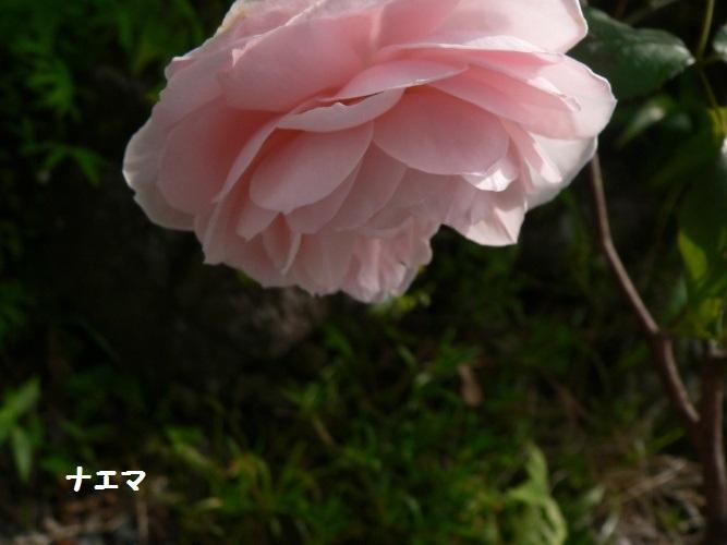 P1400589_1.jpg