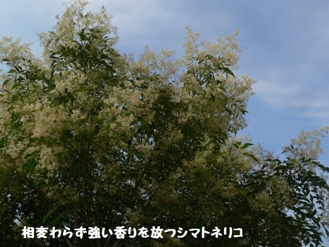 P1400591_1.jpg
