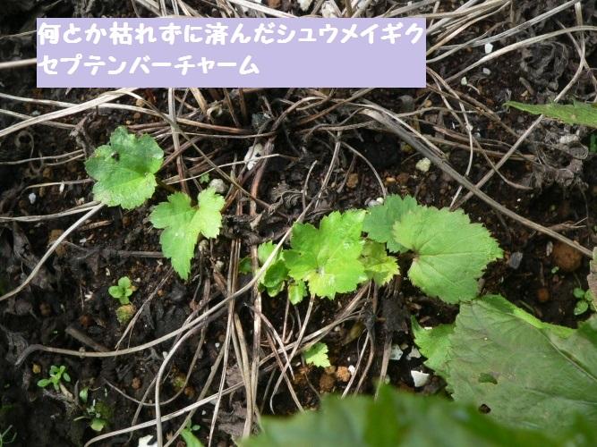 P1400596_1.jpg