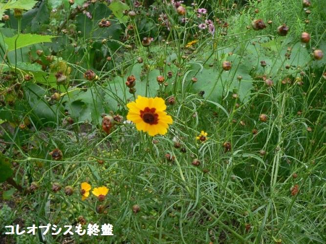 P1400632_1.jpg